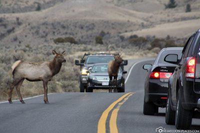 Tiere auf der Straße