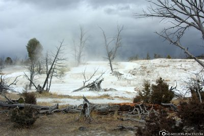 Die Mammoth Hot Springs