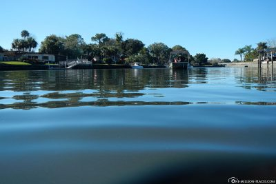 In Search of Manatees