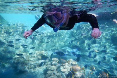 Das Grand Reef