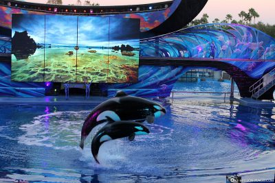 Animal show in Sea World