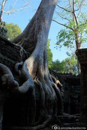 The Ta Prohm Temple