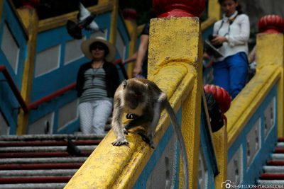 There are monkeys everywhere