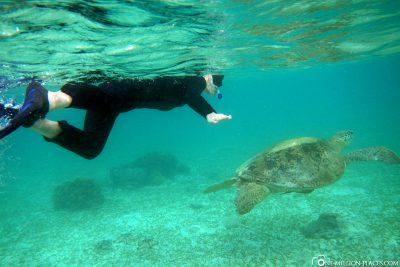 Schwimmen mit Schildkröten auf Kapalai