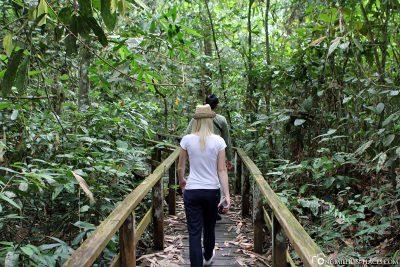 Wanderung durch den Dschungel von Borneo