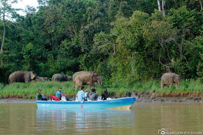 Tierbeobachtung auf dem Kinabatangan-Fluss
