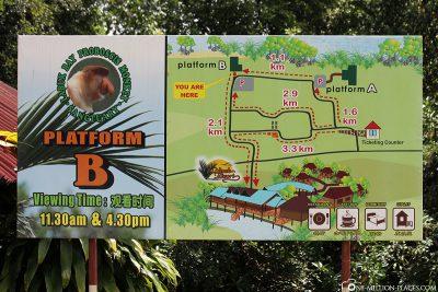 Das Proboscis Monkey Labuk Bay Sanctuary