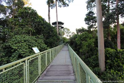 The way through the treetops