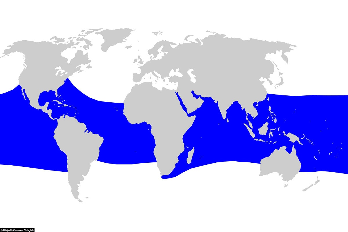 Whale sharks, distribution area, worldwide, map, travel report