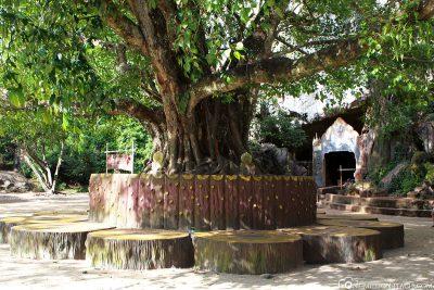 Das Gelände des Affentempels