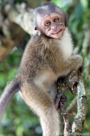 Der Affe lächelt uns an