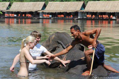 Bathing with elephants