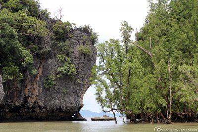 Bewachsene Felsen und kleine Inseln