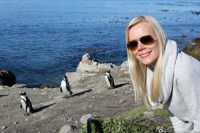 Die Pinguin-Kolonie in Betty's Bay