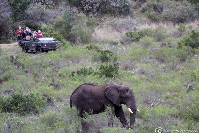 Elephants in Gondwana Game Reserve