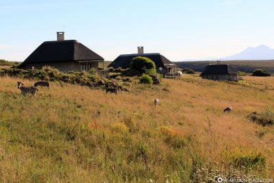 Unsere Bush Villa