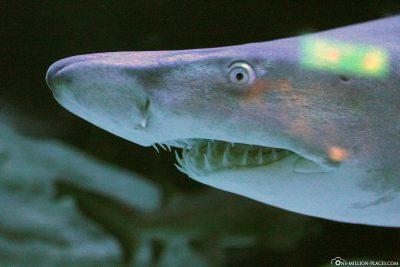 Hai im Two Oceans Aquarium