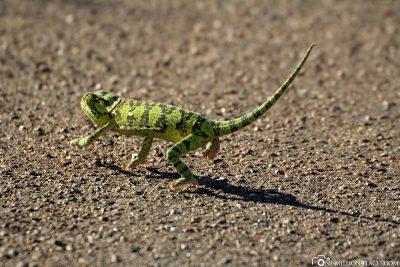 Pirschfahrt im Kruger-Nationalpark