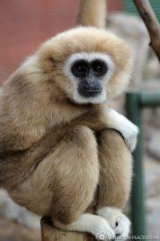 Das Monkey Town in Somerset West