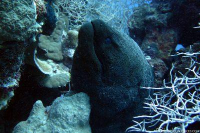 Diving in Marsa Alam
