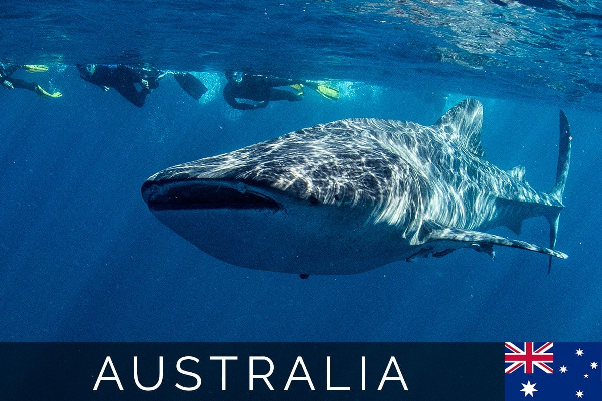 Australia Whale Share Blog Post