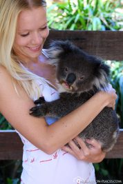 Holding a koala in your arm