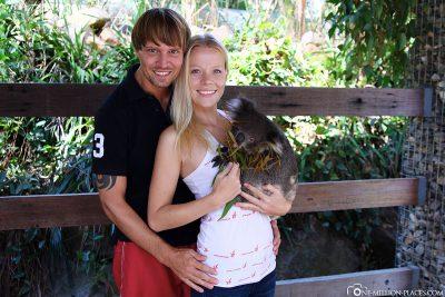 Koalas stop at Gorge Wildlife Park
