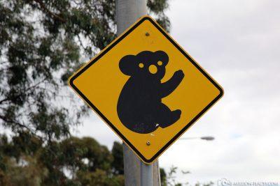 Koala Shield