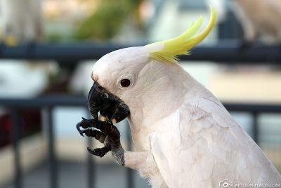 Ein weißer Kakadu