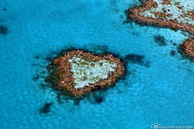 The Heart Reef in Australia