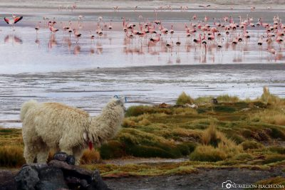 The Laguna Colorada in Bolivia