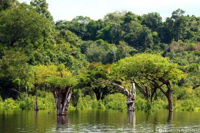 Bootsfart auf dem Rio Negro