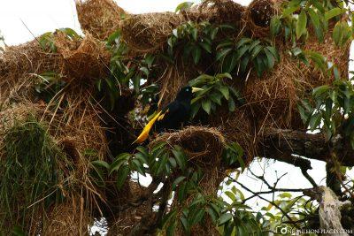 Wildlife in the Amazon