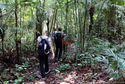 Wanderung durch den Amazonas Dschungel