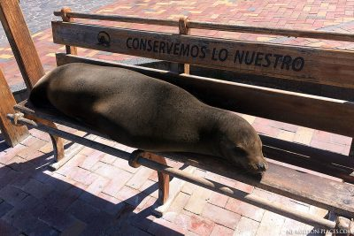 Sea lions in Puerto Baquerizo Moreno
