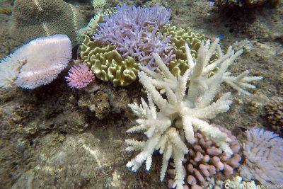 Die Unterwasserwelt der Insel