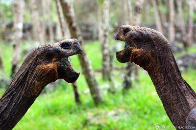 Die Begrüßung zweier Riesenschildkröten