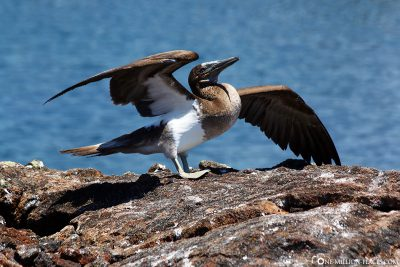 The wildlife of Galapagos