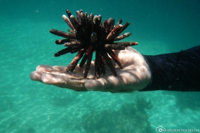 Underwater world of Los Tuneles