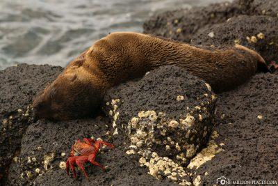 A sea lion baby