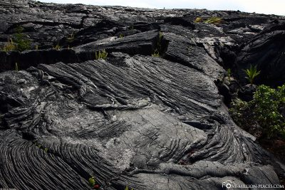 The lava fields in Kalapana