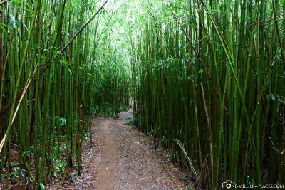 The Bamboo Forest on Maui