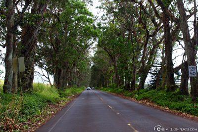 The Kuhiu Highway