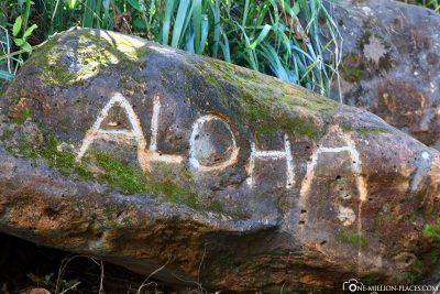 Aloah Hawaii