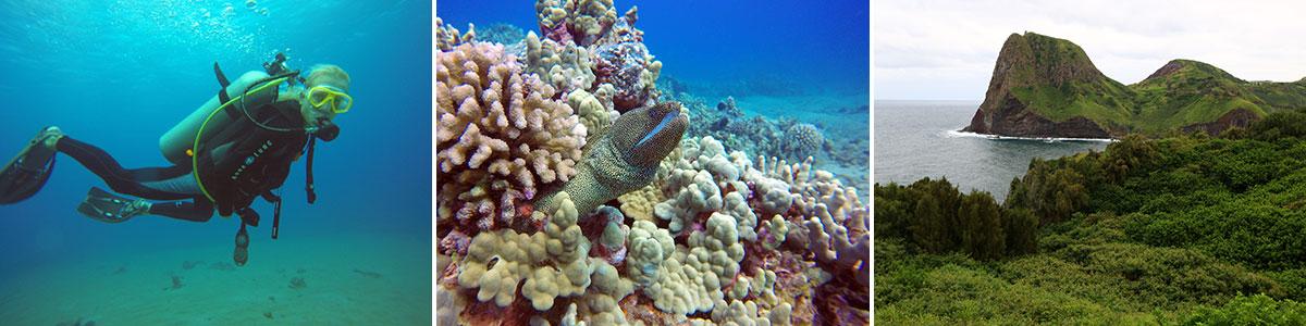 Maui Tauchen Headerbild