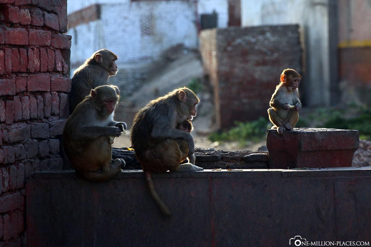 Affentempel, Agra, Indien, Tour, Sehenswürdigkeiten, Fotospots, Reisebericht