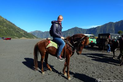 The horses at Mount Bromo
