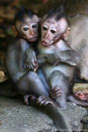 The little baby monkeys