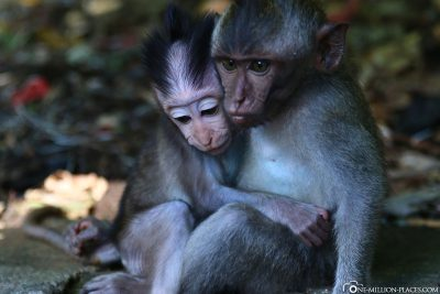 The Sacred Monkey Forest