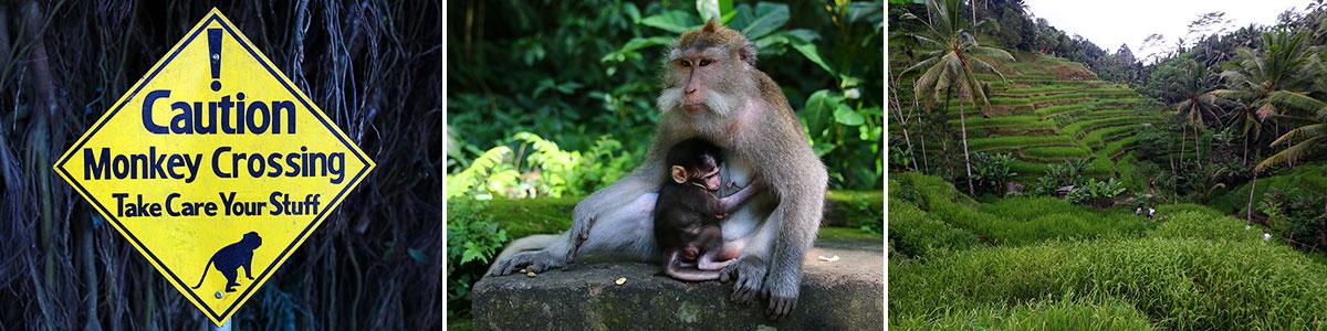 Monkey Forest Ubud Headerbild